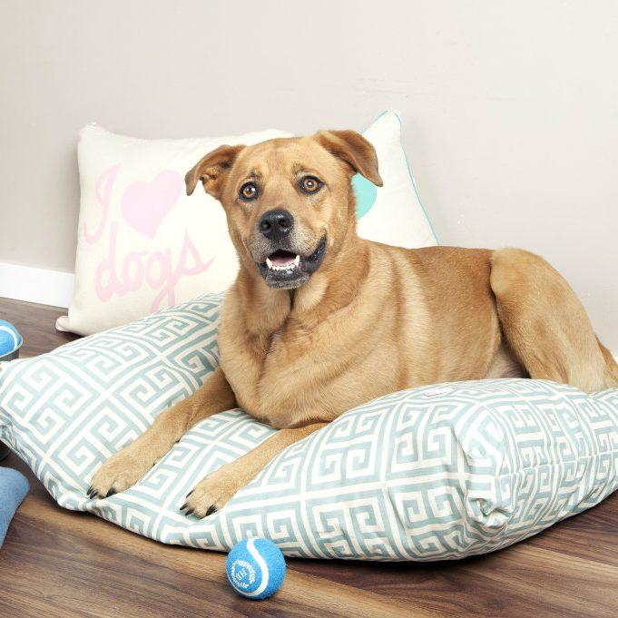 Cuscini-per-cani-la cuccia
