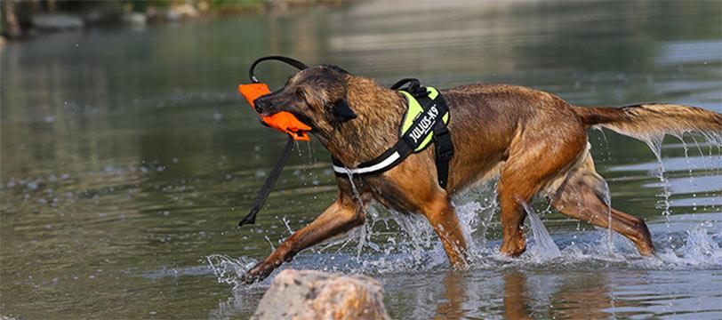 pettorine-per-cani-ticino