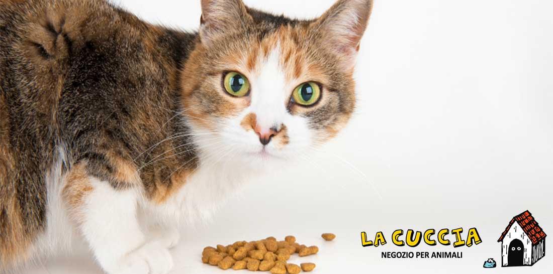 cibo-per-gatti-ticino