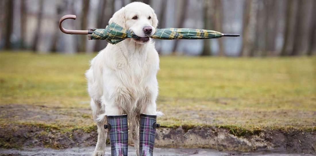 giacche-cappotti-cani